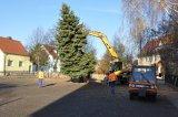 2012-11-17 Weihnachtsbaum