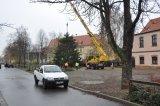 2013-11-22 Weihnachtsbaum