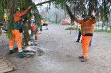 Bild ds_20131122-weihnachtsbaum-24-jpg